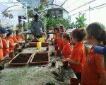 Jnr 1C planting 2