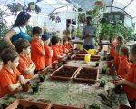 Jnr1C planting